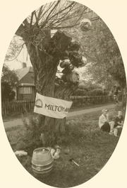 A rare early archive photo of the Beer Tree (please note ACTUAL tree in existence!)